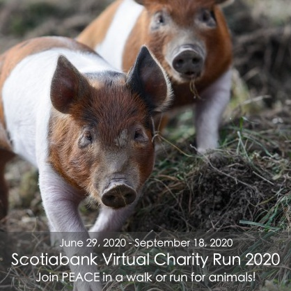 SCOTIA BANK VIRTUAL CHARITY RUN 2020