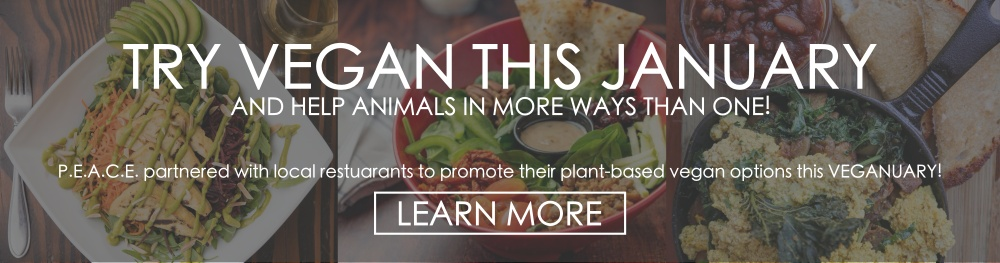 TRY VEGAN THIS JANUARY AND HELP ANIMALS IN MORE WAYS THAN ONE! P.E.A.C.E. partnered with local restaurants to promote their plant-based vegan options this veganuary. Learn more.