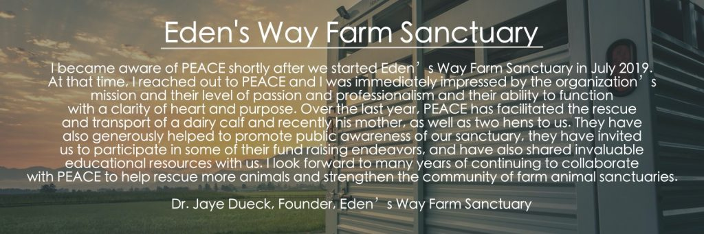 EDEN'S WAY FARM SANCTUARY  I became aware of PEACE shortly after we started Eden's Way Farm Sanctuary in July 2019. At that time, I reached out to PEACE and I was immediately impressed by the organization's mission and their level of passion and professionalism and their ability to function with a clarity of heart and purpose. Over the last year, PEACE has facilitated the rescue and transport of a dairy calf and recently his mother, as well as two hens to us. They have also generously helped to promote public awareness of our sanctuary, they have invited us to participate in some of their fund raising endeavors, and have also shared invaluable educational resources with us. I look forward to many years of continuing to collaborate with PEACE to help rescue more animals and strengthen the community of farm animal sanctuaries.  Dr. Jaye Dueck, Founder, Eden's Way Farm Sanctuary