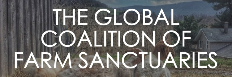 THE GLOBAL COALITION OF FARM SANCTUARIES